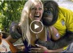 Ape loves girl's breasts