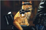 Cat on a motorbike