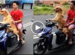 Dog – driver