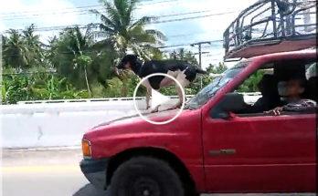 Dog on the hood