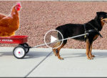 Dogs cart and chicken