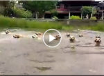 Dogs swimming races