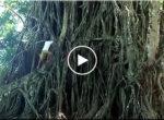 Fast tree climber