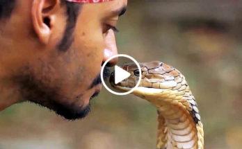 Thai Snake Show
