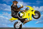 Thai monkey motorcycle driver