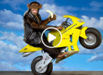 Thai monkey motorcycle driver