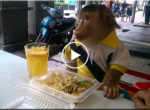 Monkey eating lunch