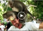 Monkey fuck on the head