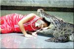 Playing with crocodile