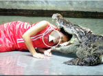 Playing with crocodile