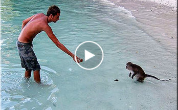 Playing with monkeys